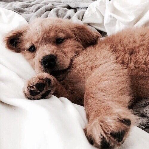 5923912-cute-puppy-pics